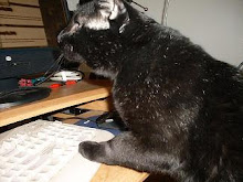 Blogging Kitty Cat
