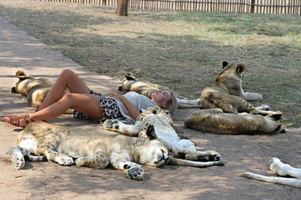 Sleeping With The Lions