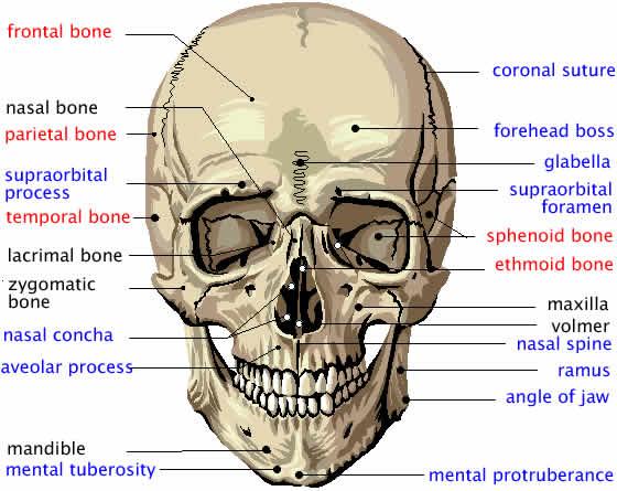 Atlas Sobotta Anatomia Pdf