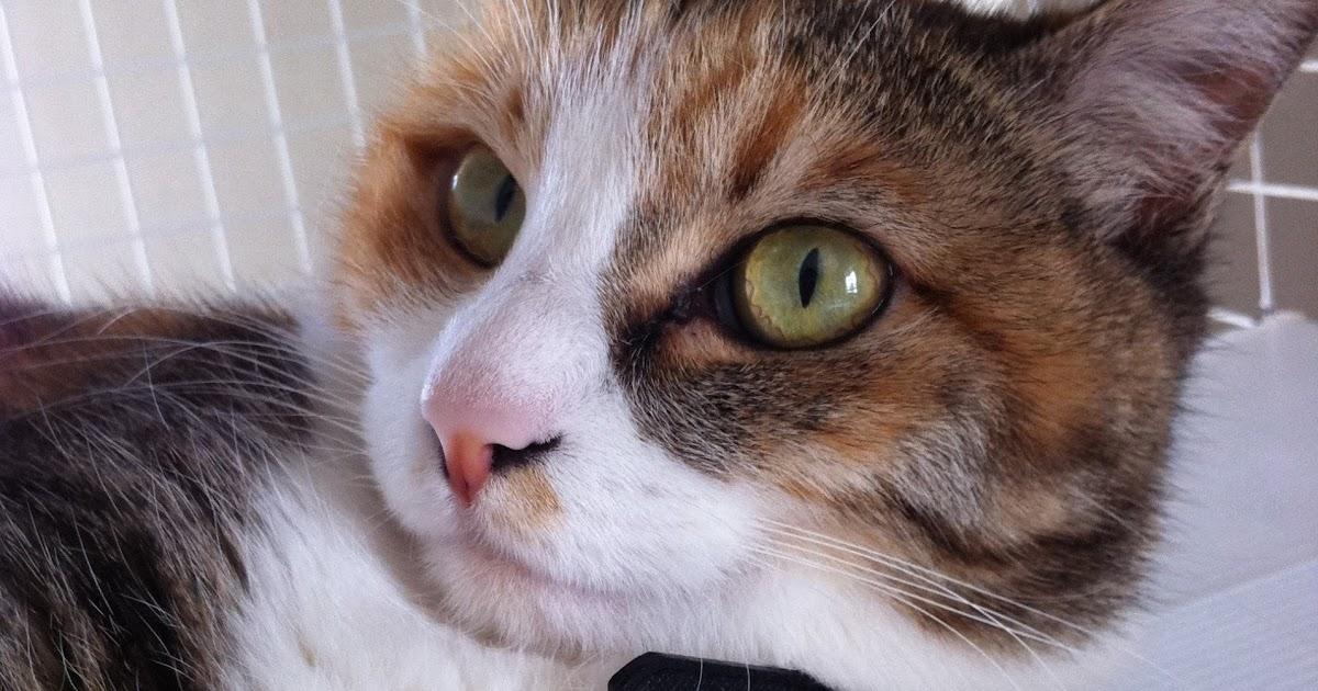 成猫で体重が1キロ程度しかない場合 : 生活・身近 …