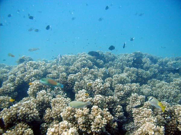 Underwater oyster reef - photo#14