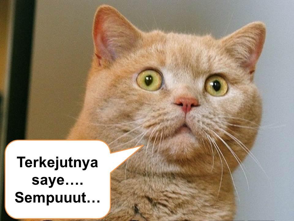gambar kucing - gambar kucing lawak giler