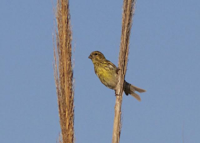 Spain, Costa Blanca, Birding