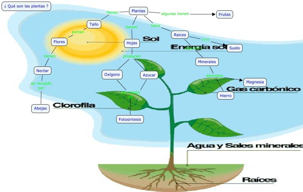 Blog de 3 de primaria ciencias naturales y ciencias sociales for Un arbol con todas sus partes