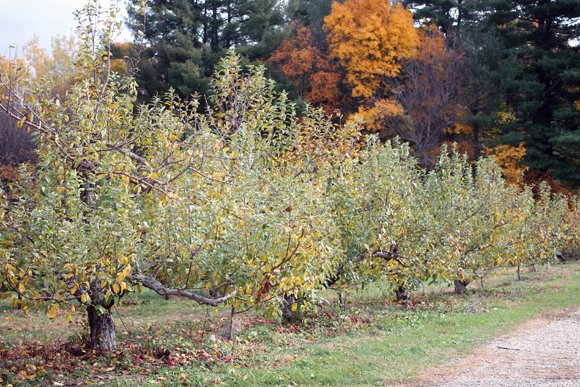 nashoba valley winery, fall style, new england fall style