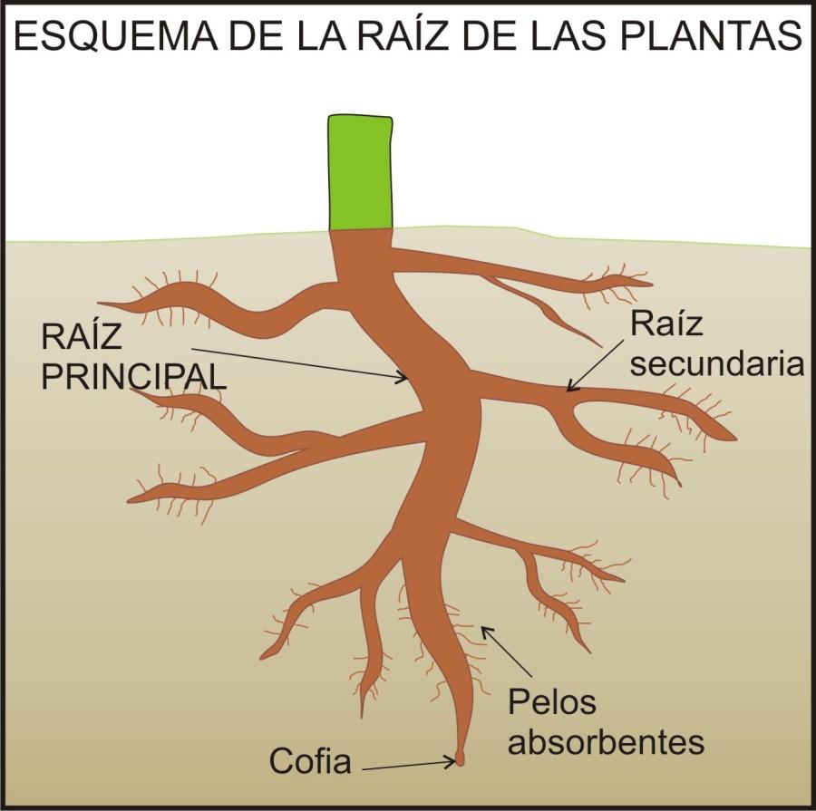 Las partes de las plantas y sus funciones las partes pe for Un arbol con todas sus partes