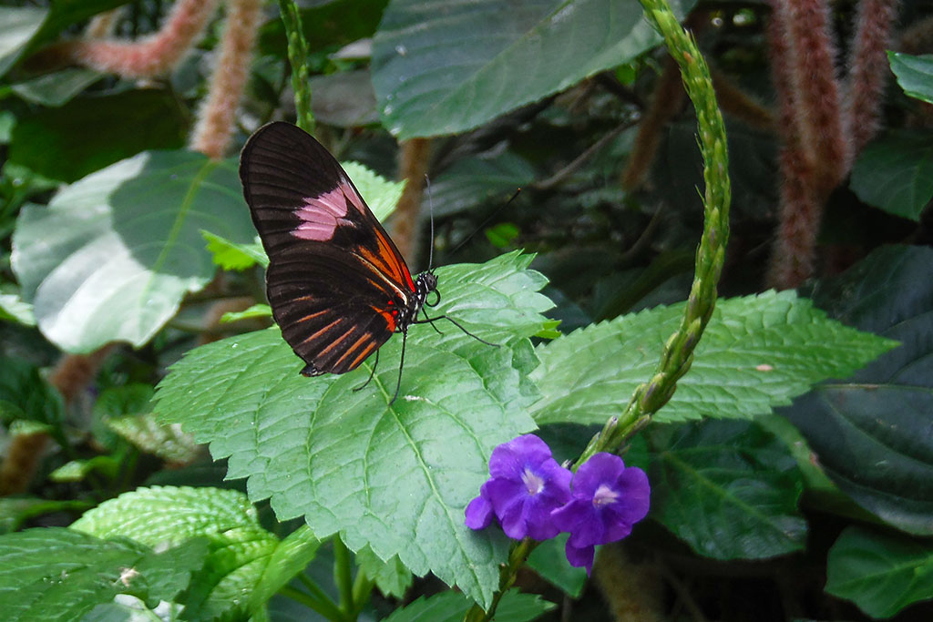Butterfly from the Niagara Butterfly Conservatory