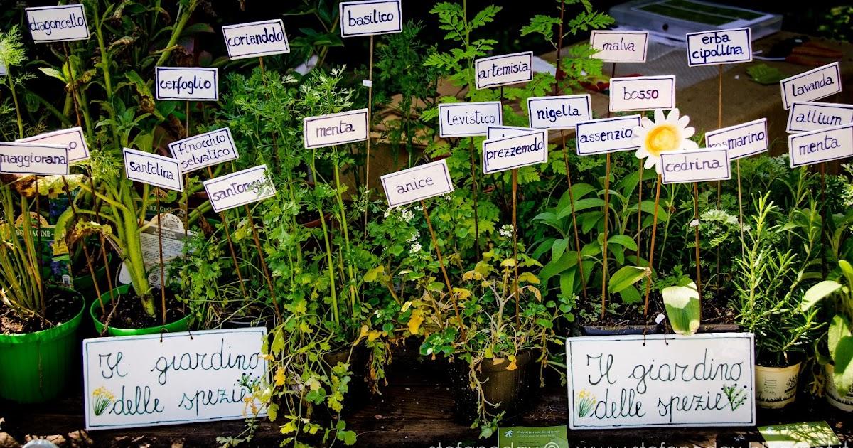 The garden of spices...