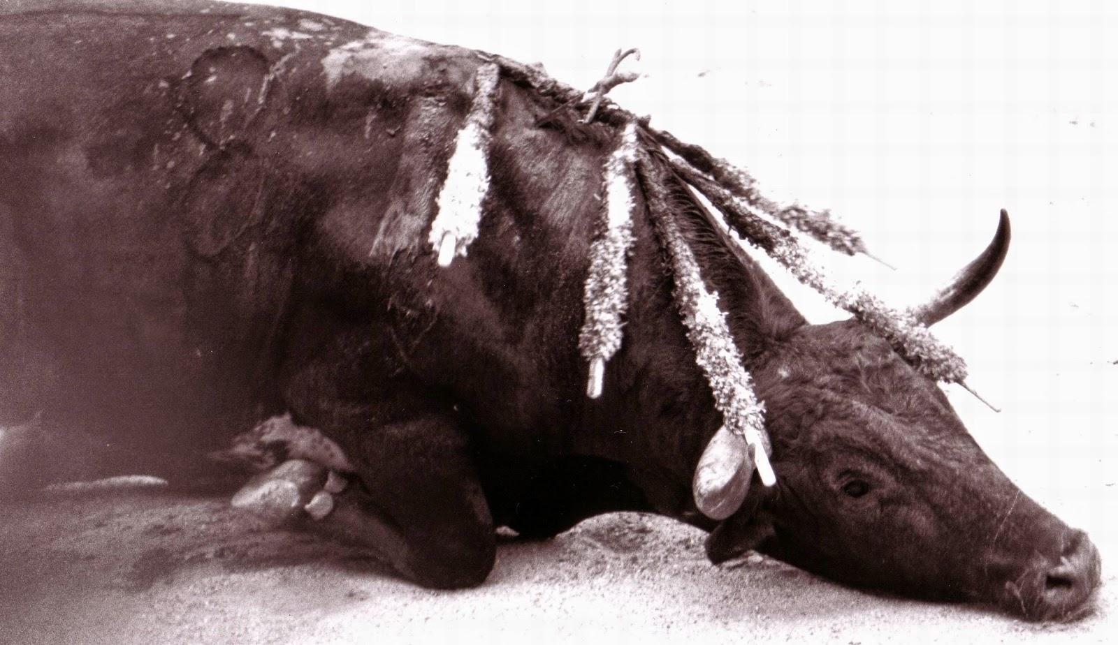 Toro agonizando tras una corrida. Crueldad hacia los animales