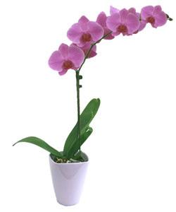 le jardin de pascaline on m 39 a offert une orchid e phalaenopsis. Black Bedroom Furniture Sets. Home Design Ideas