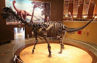 Il camarasaurus si cibava di piante e foglie quasi tutto il giorno