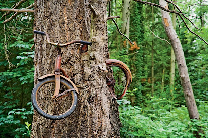 Tree Embraces Bike.