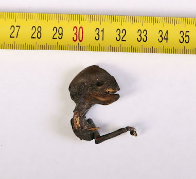 The size of the tiny alien creature