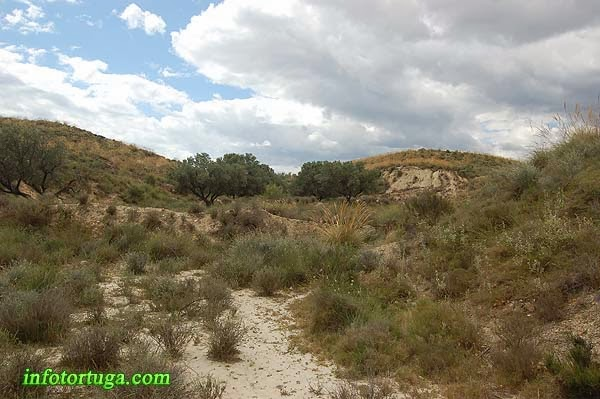 Hábitat de la tortuga mora en Almería
