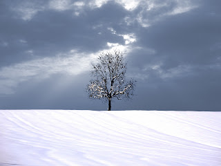 Tree and Snow wallpaper