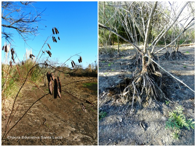 Las plantas en el tajamar chico acusan la falta de agua - Chacra Educativa Santa Lucía