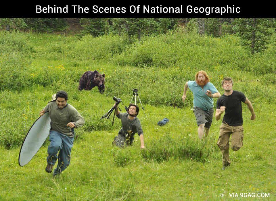 Run you idiots