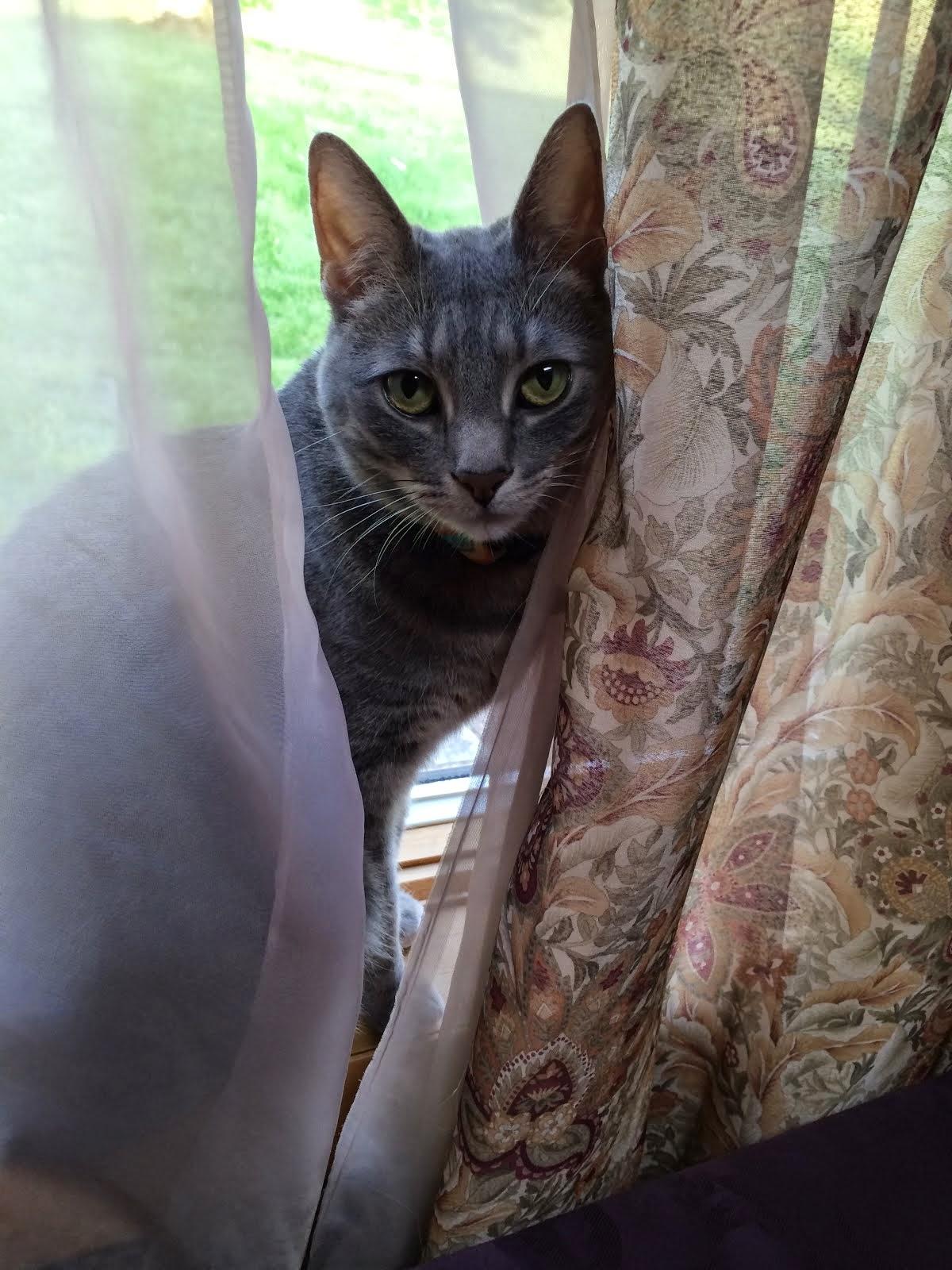 My Grandcat