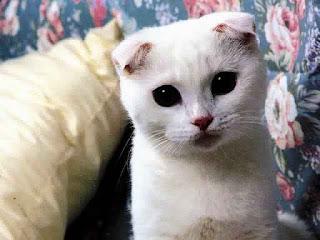 Gambar Wallpaper Kucing Lucu Banget 200023
