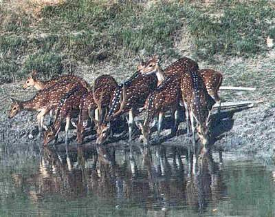 wildlife of sundarbans