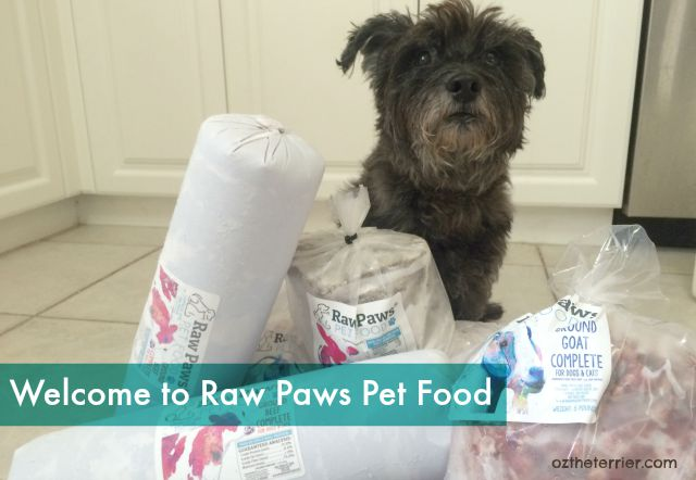 Oz the Terrier receives a shipment of raw diet for dogs from Raw Paws Pet Food