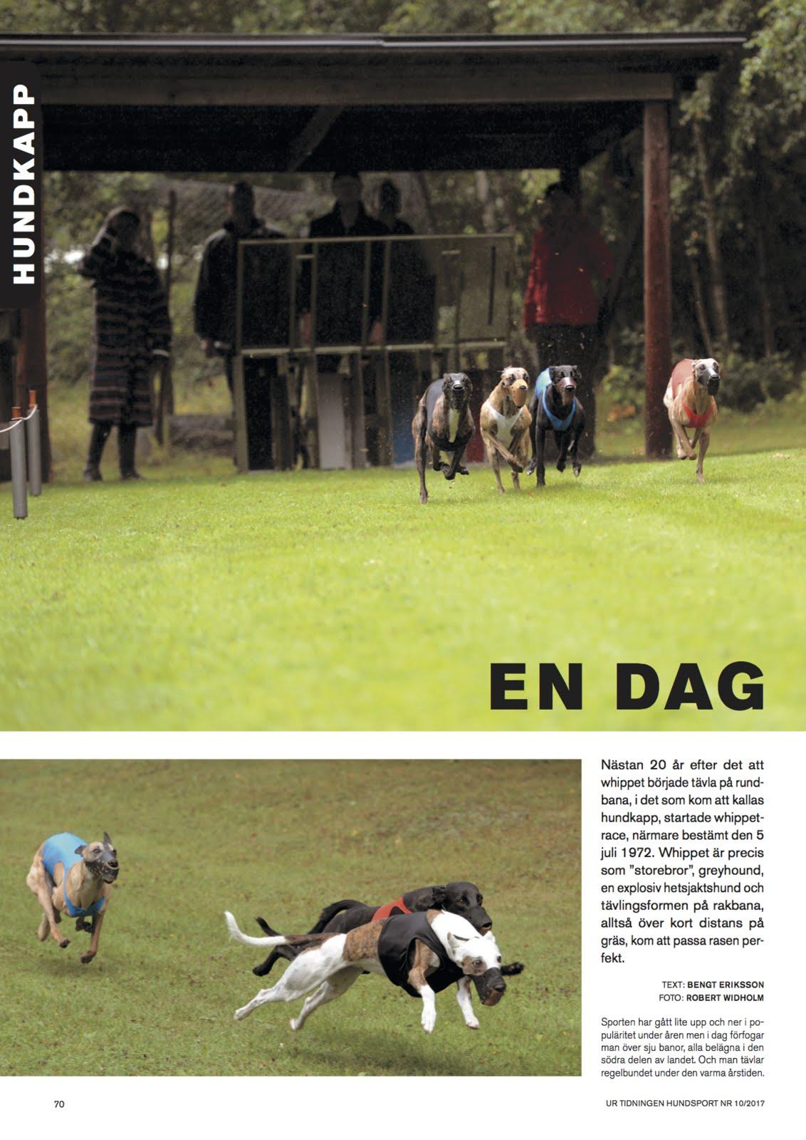 Artikel om whippet race