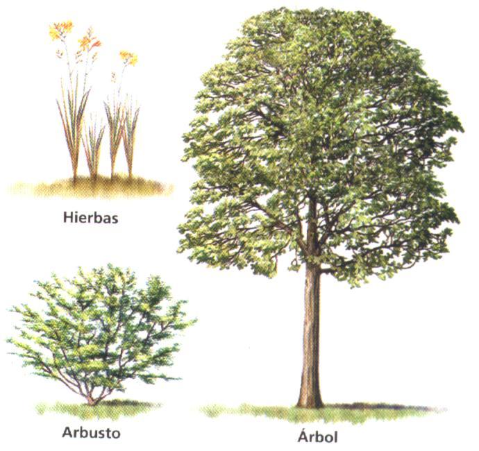 Las plantas Clasificación de las plantas