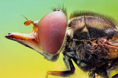 Nature Wallpaper insects never seen