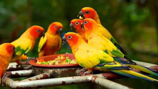 vé máy bay đi Singapore - Những chú vẹt ở vườn chim Jurong Singapore