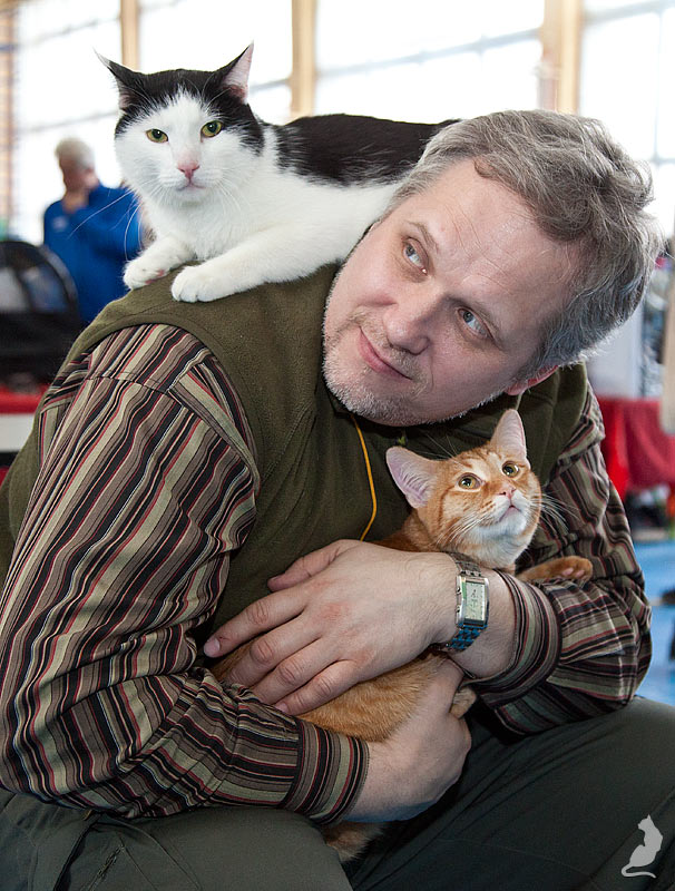 Выставка кошек в Реутове, шоу домусов, домусы, Мурзик