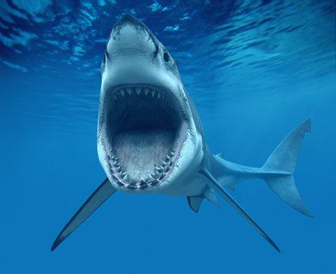 10 Spesies Hiu yang Hampir Punah di Dunia