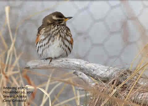 Which Bird Is Called Nature S Radar