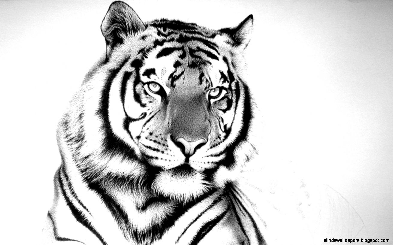 White Tiger Widescreen Desktop Wallpapers 2302   HD Wallpaper Site