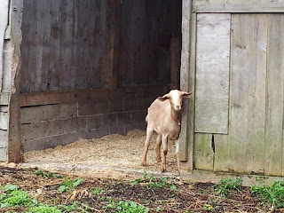 Piper standing in the door of the barn