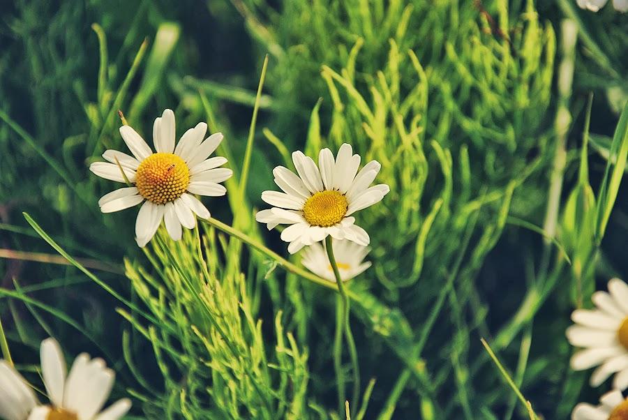 wiosna moniusza blog blogspot lifestyle