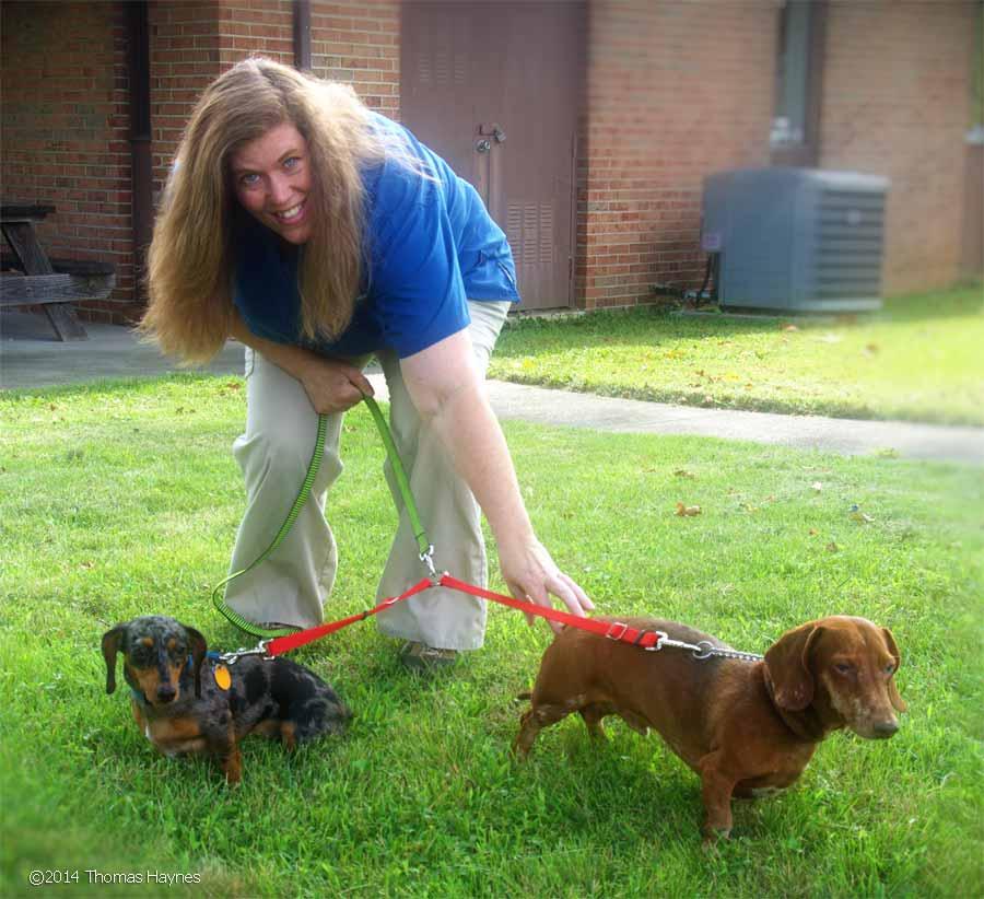 pets of a staff member, dapple dachshunds