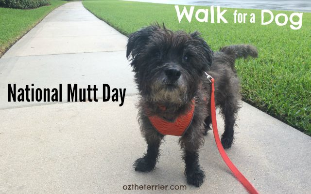Oz the Terrier uses Walk for a Dog app to support National Mutt Day, July 31