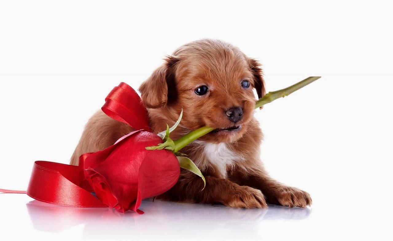 cachorro con una rosa
