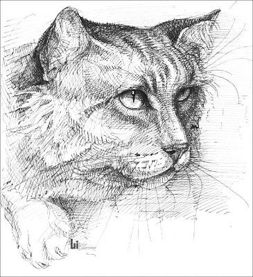 dessin le chat (dessin à l'encre, noir et blanc)