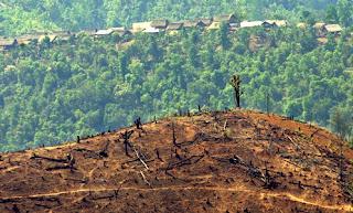 eksploitasi hutan menyebabkan hilangnya keanekaragaman hayati