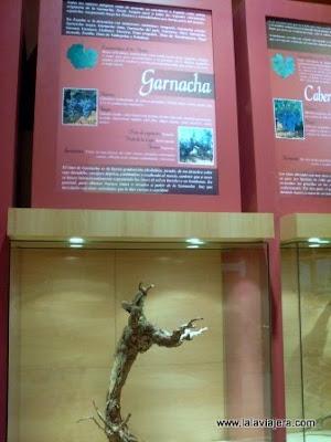 Tipos Uva Museo Vino Valdepenas