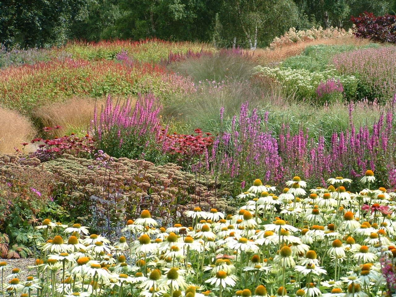 Erbacee perenni forme e colori sfumature verdi for Perenni da giardino
