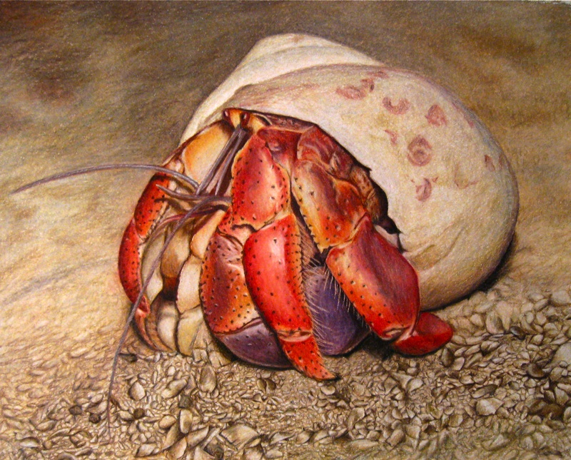 novel study english 11 crabbe Flashcards and Study Sets ...