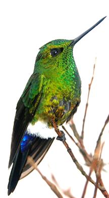 Aves de Boyacá
