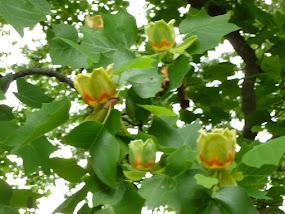 "Tree ""Tulips"""