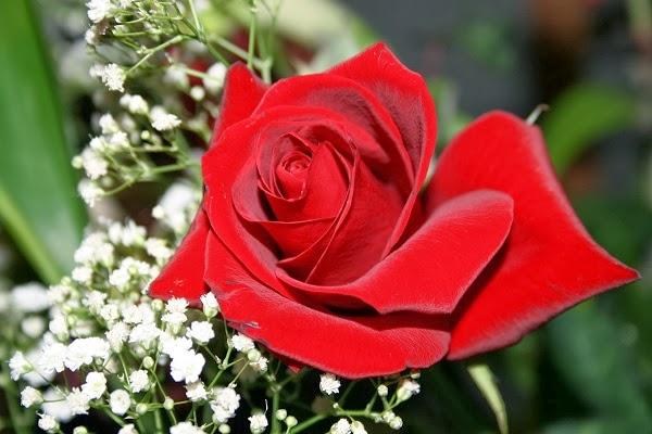 les meilleurs SMS d amour et messages romantiques à envoyer à celle et celui que vous aimez.