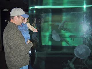 jellyfish photo mystic aquarium