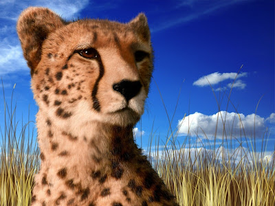 Animals Cheetah HD Wallpaper 1024x768 Pics