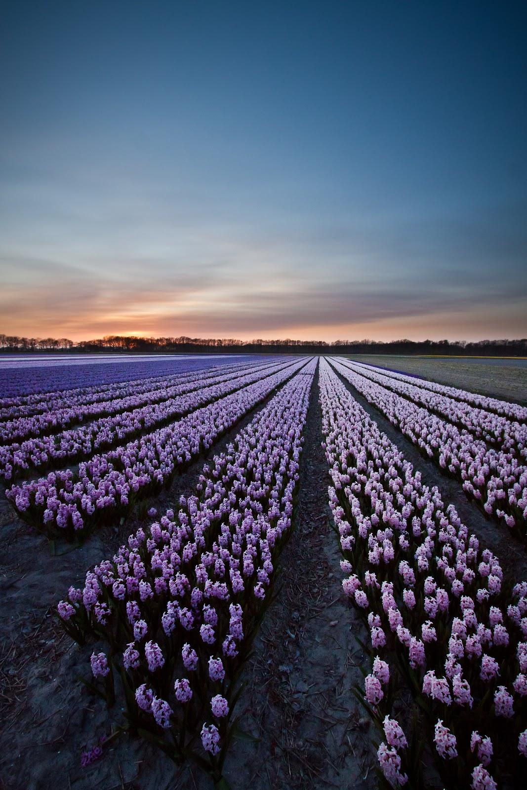 Mais de 1000 imagens sobre Beautiful Flowers no Pinterest Hibiscus  #955A36 1067 1600