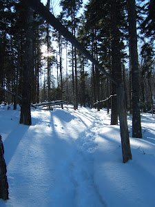 on the snow shoe trail..